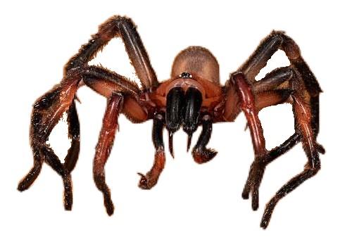 Arachnapocalypse